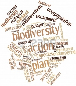 16499922-abstract-word-cloud-for-biodiversity-action-plan-with-related-tags-and-terms